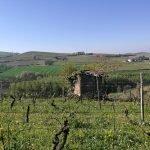 Le vigne delle Langhe in primavera