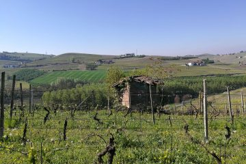 The Langhe vineyards in spring