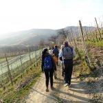 trekking e passeggiate nelle langhe e nel roero