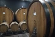Visit in a Barolo winery