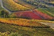 SlowDays Tour dei vini con Sommelier