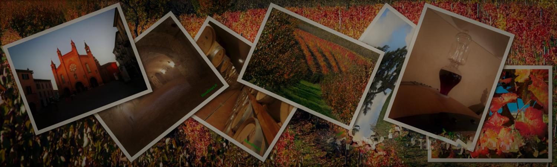 Vini, cantine, Langhe, Cartoline da un Tour personalizzato