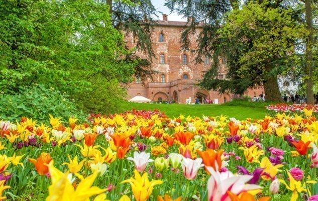 tulipani pralormo