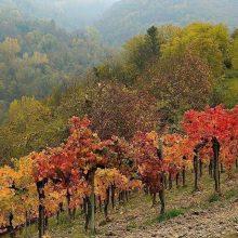 autunno nelle langhe