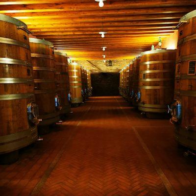 tour dei vini delle langhe
