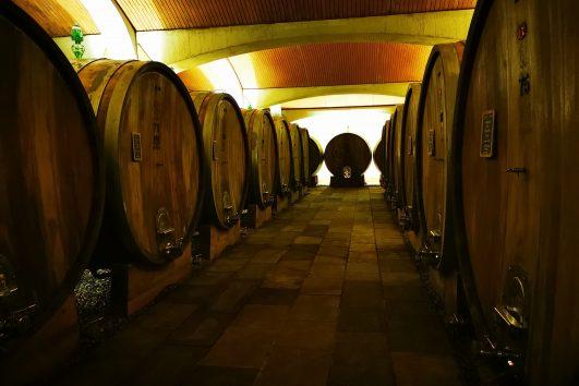 degustazioni vini langhe