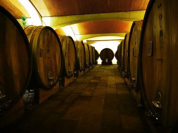 Langhe wines tasting
