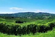 WEEK END NELLE LANGHE