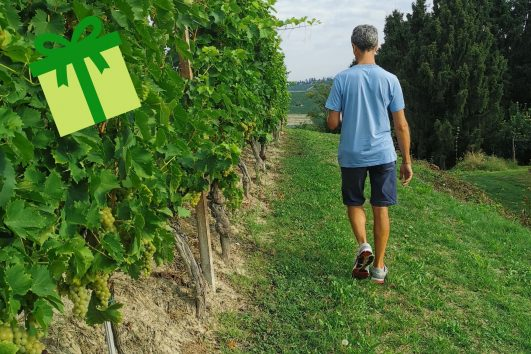 Walk in the vineyards of Barbaresco with final aperitif