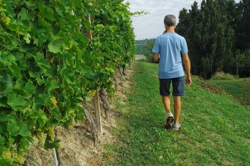 trekking and aperitif in the Langhe