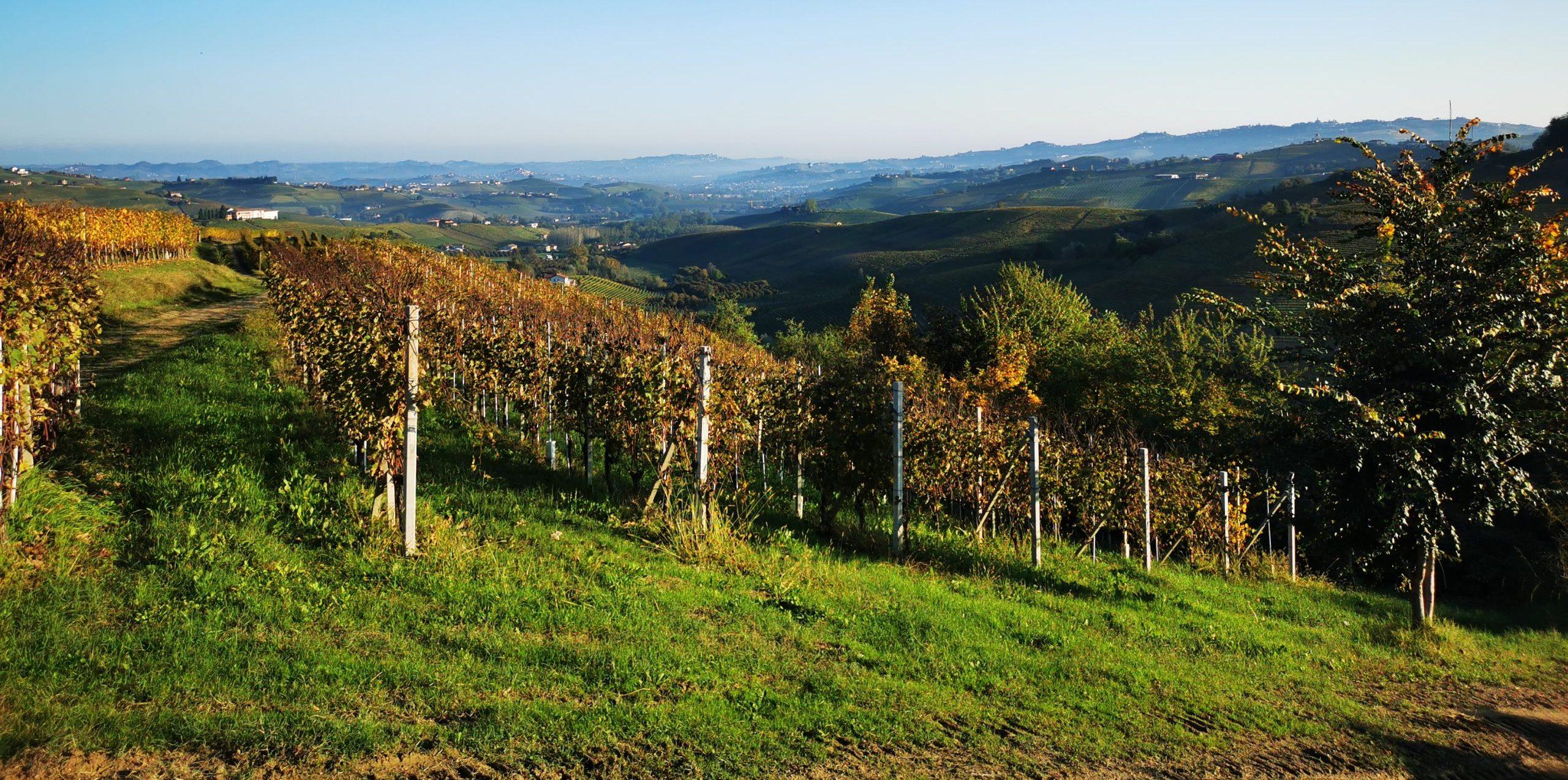 Week end Piemonte: un fine settimana tra cibo e vino