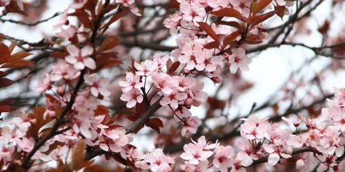 Primavera - Spring