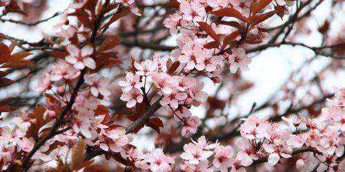 fiori-slowdays