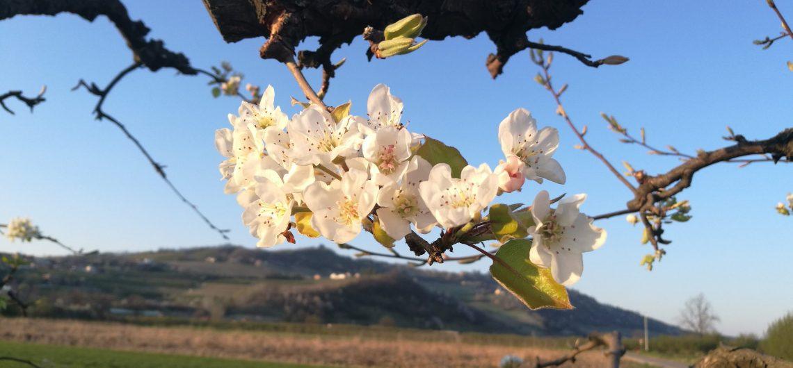 langhe-primavera-slowdays