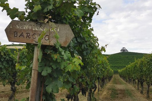 langhe walk with tasting