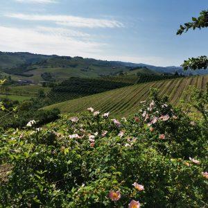 slowdays tour delle langhe roero monferrato