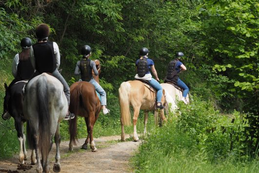 horseback riding Piedmont Langhe Roero