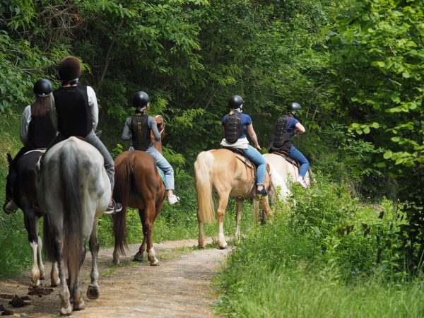 passeggiata a cavallo Piemonte Langhe Roero