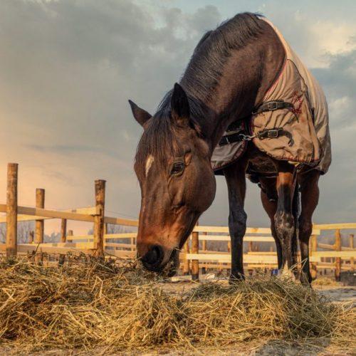 Cavalli in Langa