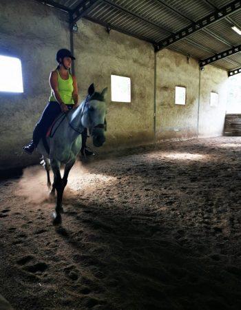 Si prende confidenza con il cavallo